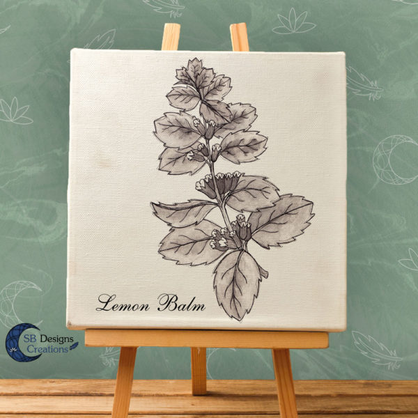 Lemon Balm - Citroenmelisse Ink Drawing Print on Canvas