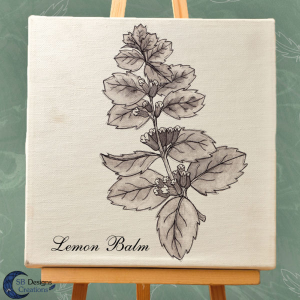Lemon Balm - Citroenmelisse Ink Drawing Print on Canvas-3