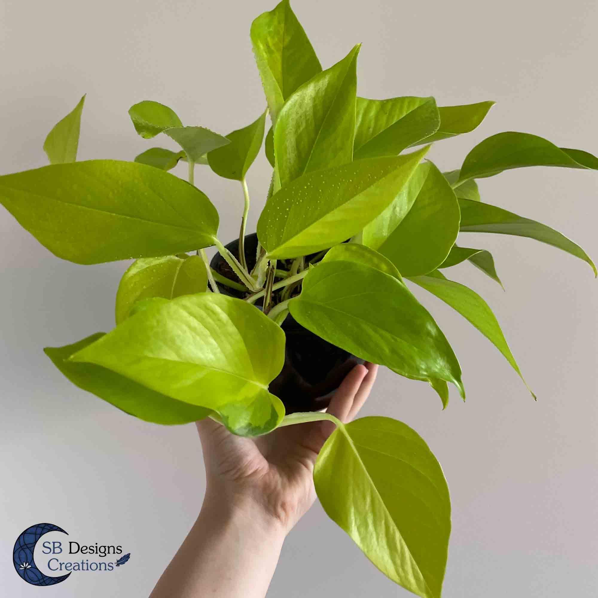 Kamerplanten-Houseplants-Inspiration-Vlog-7