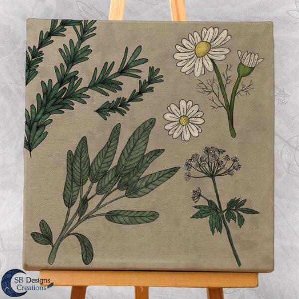 Thee-Kruiden-Art-Salie-Zevenblad-Kamillie-Rozenmarijn-3