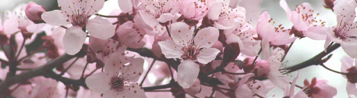Betekenis Kleur Roze Spirituele Producten Kleurenmagie