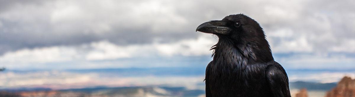 Raaf-Raven-Banner-Animal Spirit-SBDesignsCreations