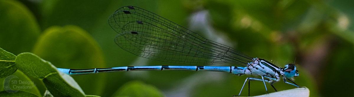 libelle-dragonfly-Banner-Animal Spirit-SBDesignsCreations