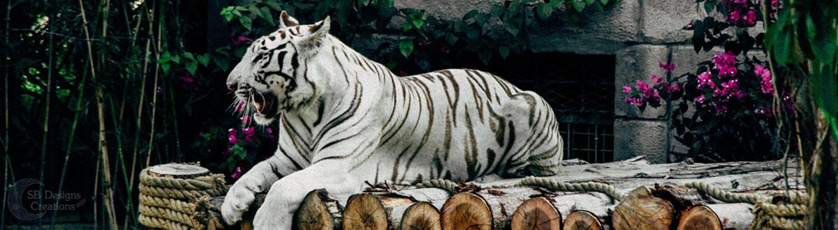 tijger-tiger-Banner-Animal Spirit-SBDesignsCreations