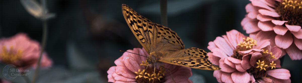 vlinder-butterfly-Banner-Animal Spirit-SBDesignsCreations